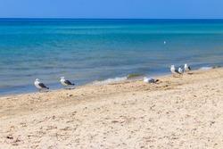 Seagulls on a sandy beach of the Black sea