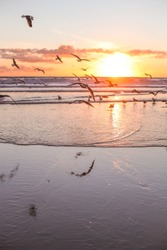 Seagulls on a sea, sunset light