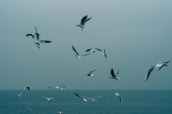Seagulls on a seashore on the hazy calm sea background