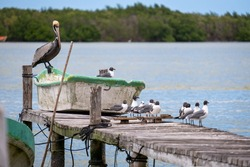 Seagulls on a wooden pier. Birds on a pier. Wooden pier full of birds.