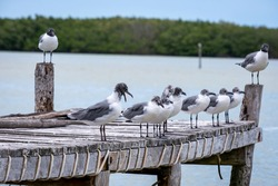 Seagulls on a wooden pier. Birds on a pier. Wooden pier full of birds.
