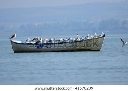 seagulls on boat on the sea
