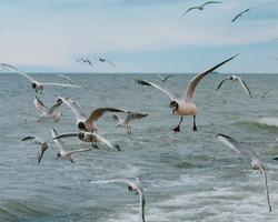 Seagulls on Caspian sea, Dagestan, Russia