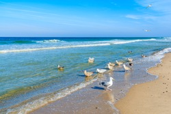 Seagulls on shore of North Sea at Kampen beach, Sylt island, Germany