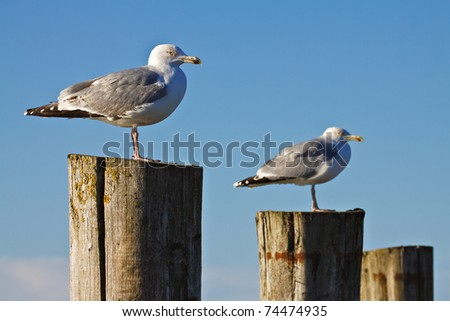 Seagulls on shore of the Baltic Sea.