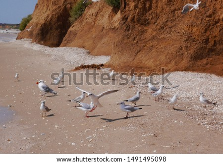 Seagulls on the beach near the sea near clay rock. #1491495098