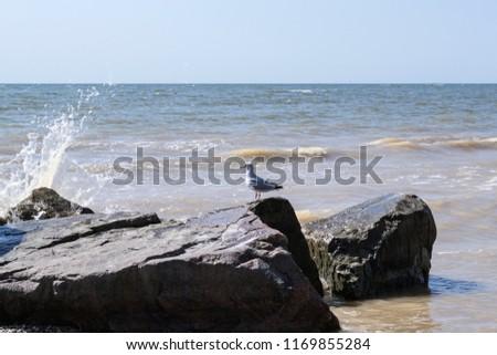 Seagulls on the big stones in the sea. Beautiful seascape. #1169855284