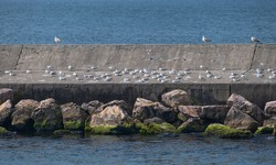 seagulls on the breakwater,  water birds resting on the jetty,