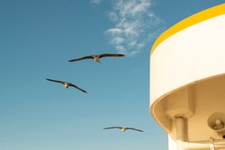 Seagulls on the ferry, Istanbul Turkey