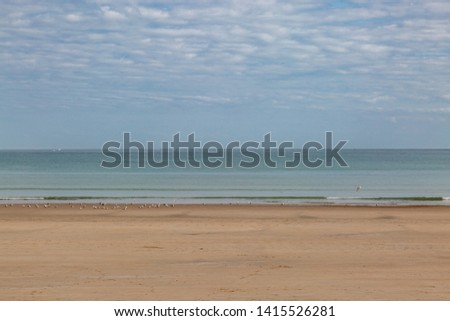 Seagulls on the shoreline of a sandy beach, on the island of Jersey