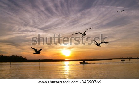 Seagulls over Gulf Coast, FL - stock photo