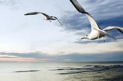 seagulls over sea at sunset
