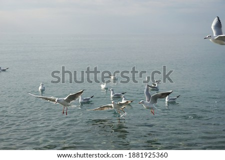 Photo of  Seagulls over water in the Black Sea in Adler.