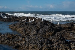 Seagulls perched on jagged rocks at the beach in winter, with choppy white waves in the background and blue sky.