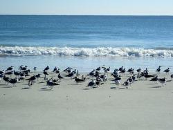 Seagulls resting on a sandy beach