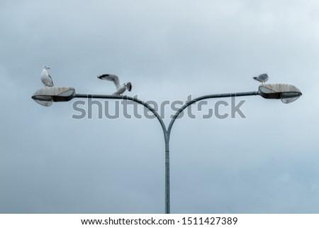 seagulls sitting on city lights against a gloomy sky #1511427389