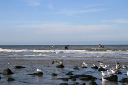Seagulls sitting on the beach rocks. Flying birds above the sea.