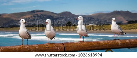 Seagulls standing on New Brighton pier, Christchurch, New Zealand