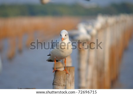 Seagulls standing on poles