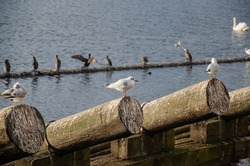 Seagulls standing on the trees near the water, sunny day with beautiful birds, wonderful white seagulls