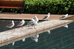 Seagulls standing with refelction in pool of water