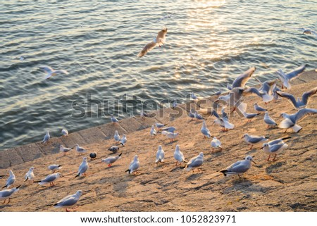 Seagulls staying on the breakwater #1052823971
