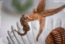 Seahorse starfish, seashells and others as a decoratives and ornamental objects Bright and warm colors representing summer, fun and holidays as well as good moments of relaxation and rest,