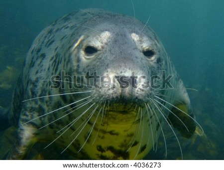 seal - stock photo