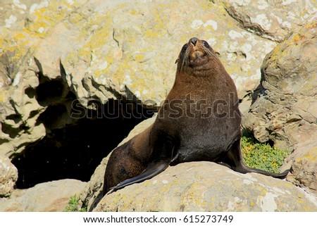seal #615273749