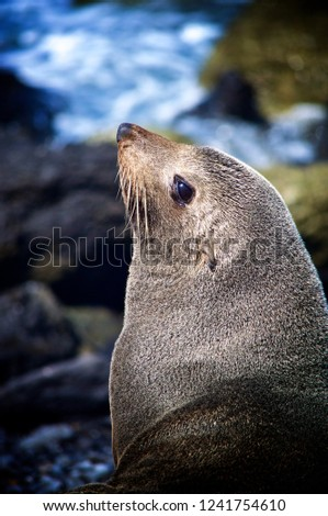 Seal Close up #1241754610