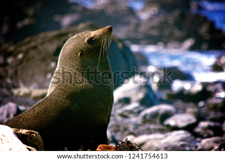 Seal Close up #1241754613