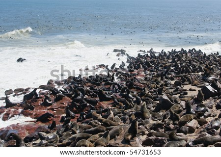 Seal Colony - stock photo