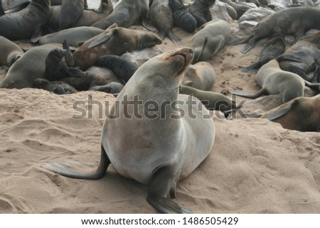 Seal with seal colony on beach
