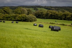 sealed hay roles in a green meadow of Southern UK