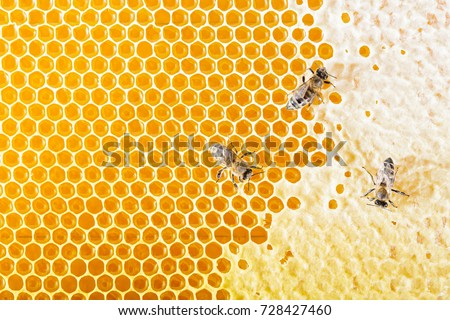Sealed honeycombs. Bees crawl on honeycomb - Shutterstock ID 728427460