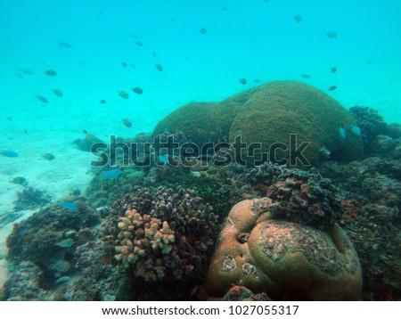 Sealife of Champagne Bay, Espiritu Santo, Vanuatu #1027055317