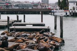 sealions on a board at pier 39 Sanfrancisco California