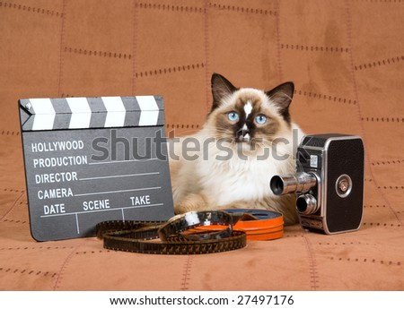 Sealpoint Ragdoll with vintage movie camera, movie clipboard and reel of film on suede background