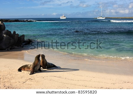 Seals on a beach on the island of Espanola in Galapagos