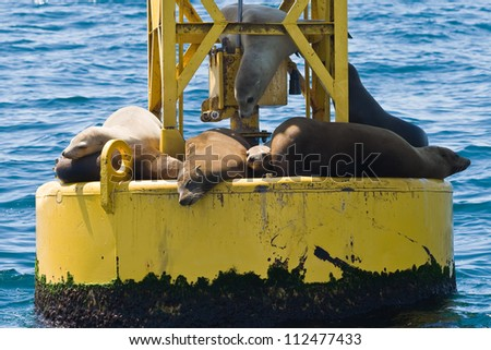 Seals resting on a buoy off the coast of California.