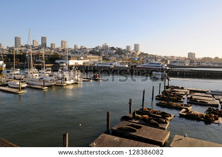 Seals (sea lions) resting on the pier at the Pier 39 in San Francisco, California