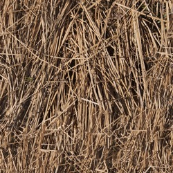 Seamless abstract background. Dry grass sedge texture. Natural background.