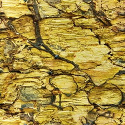 Seamless abstract background. Old rotten moldy wood texture background. Old damaged background texture with dirt and scratches close up