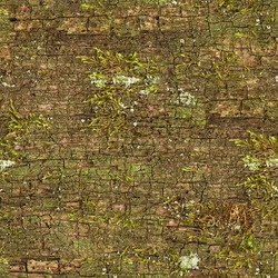 Seamless abstract background. The element of an old oak trunk surface, devoid of bark. The pattern of cracks on the surface of a dead tree. Green moss on the dry tree. Pattern of tree trunk close-up