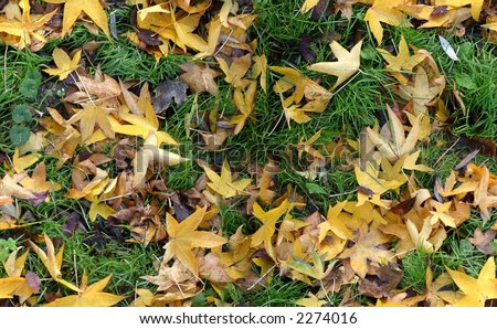 Seamless autumn groundcovering with grass and coloured leaves. Use as background or texture.