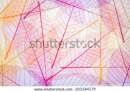 Seamless colorful leaves behind - Shutterstock ID 203584579