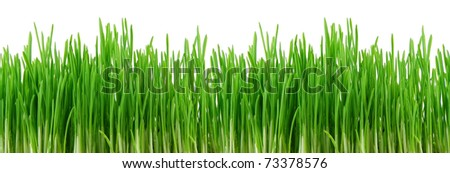 Seamless fresh spring green grass isolated on ? white background