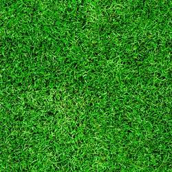 Seamless green grass background