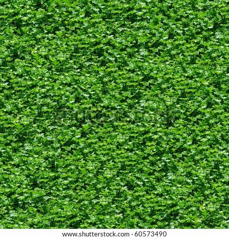 Textured Backgrounds on Seamless Green Grass Texture Background   Texture Pattern For