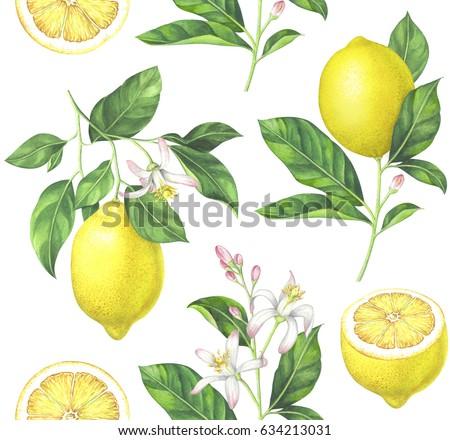 Seamless lemon pattern on white background. Hand drawn watercolor illustration.